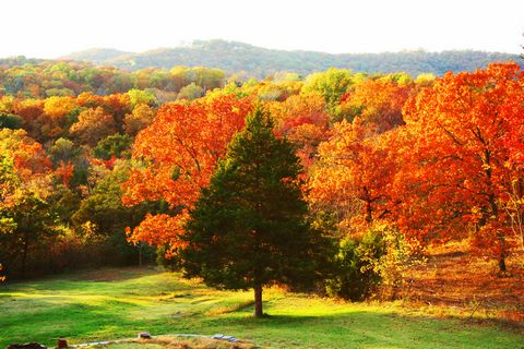 Autumn in the Ozarks in Forsyth, Missouri