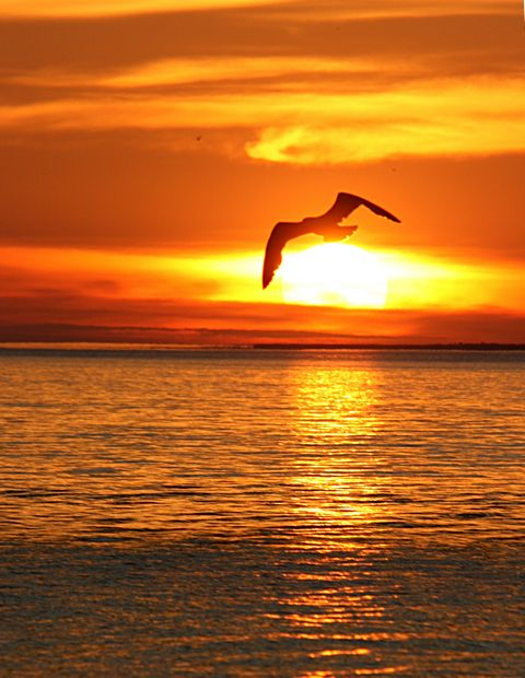 seagull at sunset over Lake Michigan at Mackinac City